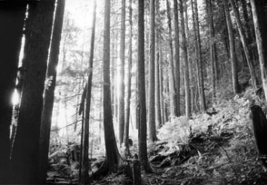 Forest Photo (195KB)